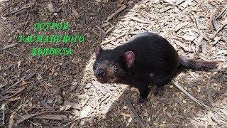 Остров Тасманского Дьявола.|The island of the Tasmanian Devil