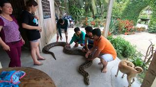 Đưa trăn khổng lồ đi tắm ở Miền Tây | Giant python