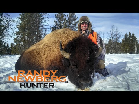Hunting Montana Buffalo with Randy Newberg - Free Range Biso