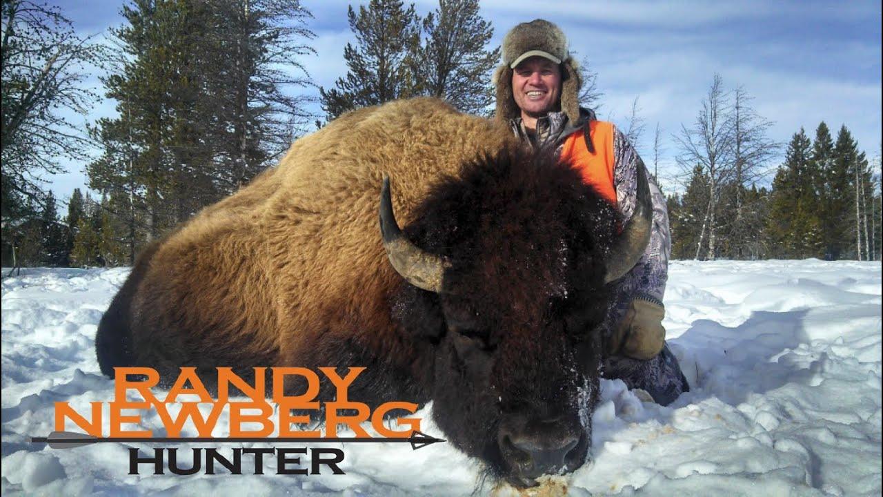 Hunting montana buffalo with randy newberg free range for Bison motors great falls mt