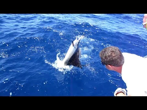 Sailfish Release On The Release During NC State Fishing School