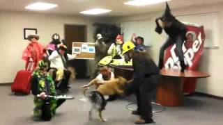 Cornerstone/WCORHA - The BEST Harlem Shake video ever!!!!