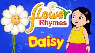 Flower Rhymes for Children - Daisy