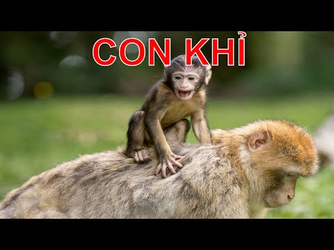 Dạy bé học các loài động vật tiếng Việt | em tập nói tên tiếng kêu con vật | Dạy trẻ thông minh sớm