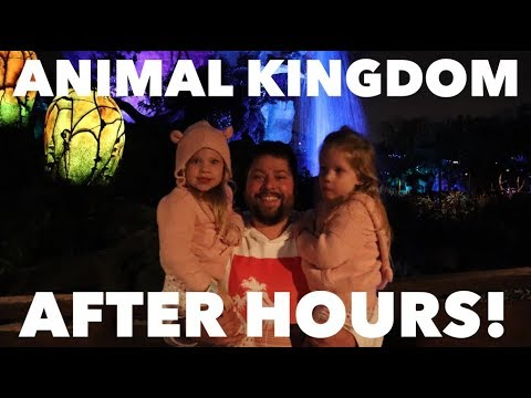 GOING INTO ANIMAL KINGDOM AT DISNEY WORLD AFTER HOURS