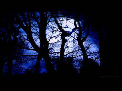 Forest at Night Sounds | Owls & Crickets | Rustling leaves and wind