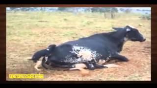 Самые смешные ролики про животных 16