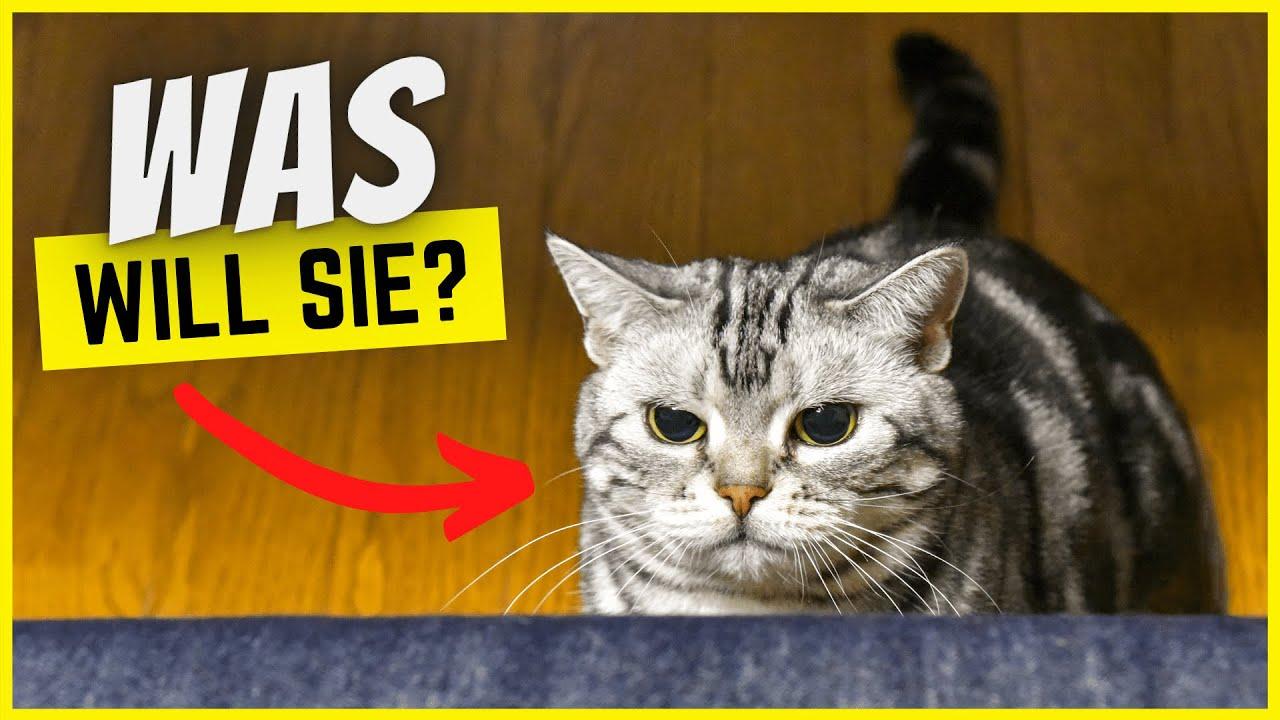 Warum folgt dir deine Katze überall hin? (Der wahre Grund