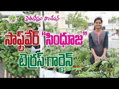 Organic Terrace Garden by Software Engineer || Reguri Sindhuja