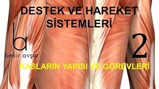 YKS DESTEK VE HAREKET SİSTEMLERİ-2