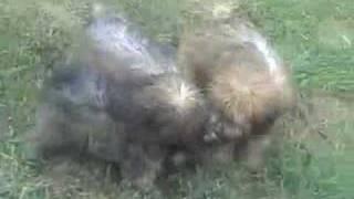 Baixar Puppies Galore