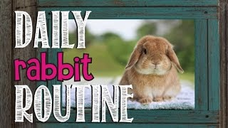 rabbit (domesticated animal)