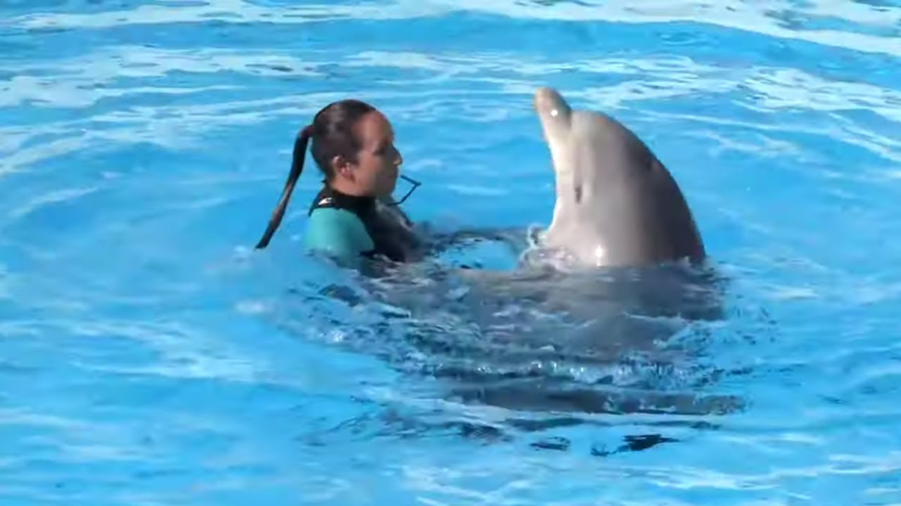 rencontre avec les dauphins femme enceinte)