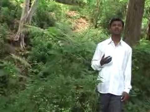 Tamil Worship song Enai Vala vaikum Deivame-shalom