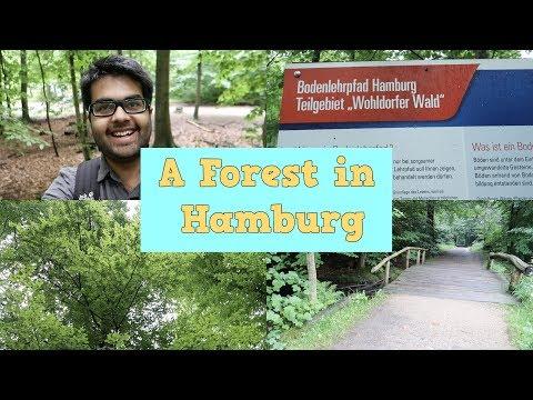 A Forest in Hamburg: Wohldorfer Wald