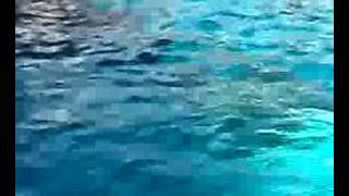 playfull dlphins
