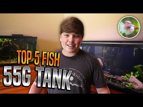 Best Fish For 55 Gallon Tank!!!!