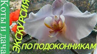 ЭКСКУРСИЯ ПО ПОДОКОННИКАМ  Мои комнатные цветы и растения ЦВЕТЫ НА ПОДОКОННИКЕ 3 сенсационная новост