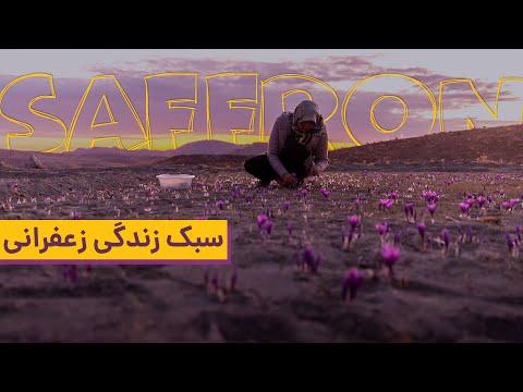Persian Saffron Field at Night & People Lifestyle in Iran   زندگی به سبک زعفران