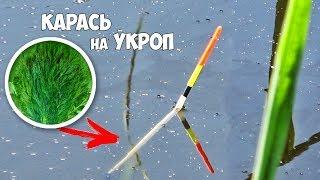 Поплавочная ЛОВЛЯ КАРАСЯ на УКРОП!!! Рыбалка на КАРАСЯ в КАМЫШАХ  с поплавком