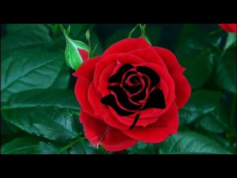 black flower sound channel