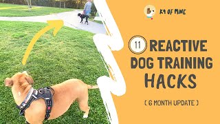 11 Reactive Dog Training Hacks: Walking a Dog Who Barks & Lunges