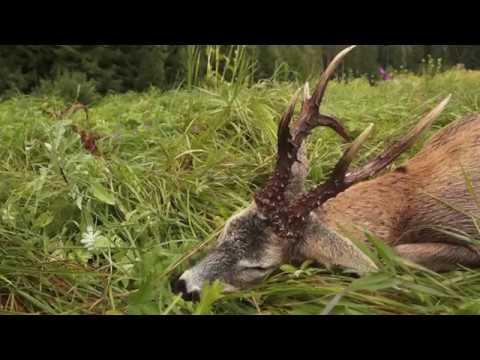 Hunting Adventures In Estonia