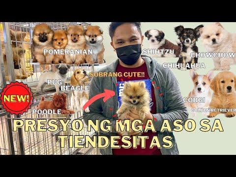 UPDATED PET PRICE LIST SA TIENDESITAS PET VILLAGE (JUNE 2021)   SOBRANG CUTE!! ***MUST WATCH***
