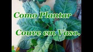 Como Plantar Couve em Vaso