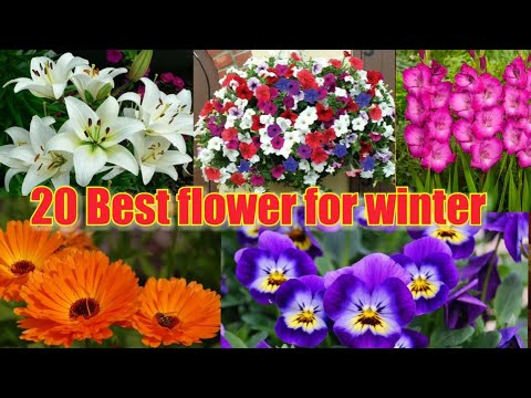 Best Winter Flowers In Indian Weather