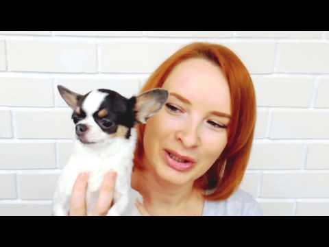 видео: Покупки с aliexpress!!! Одежда для собак (платья, шубка, плащик)