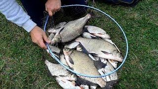 Удачная рыбалка на фидер! Ловля леща осенью