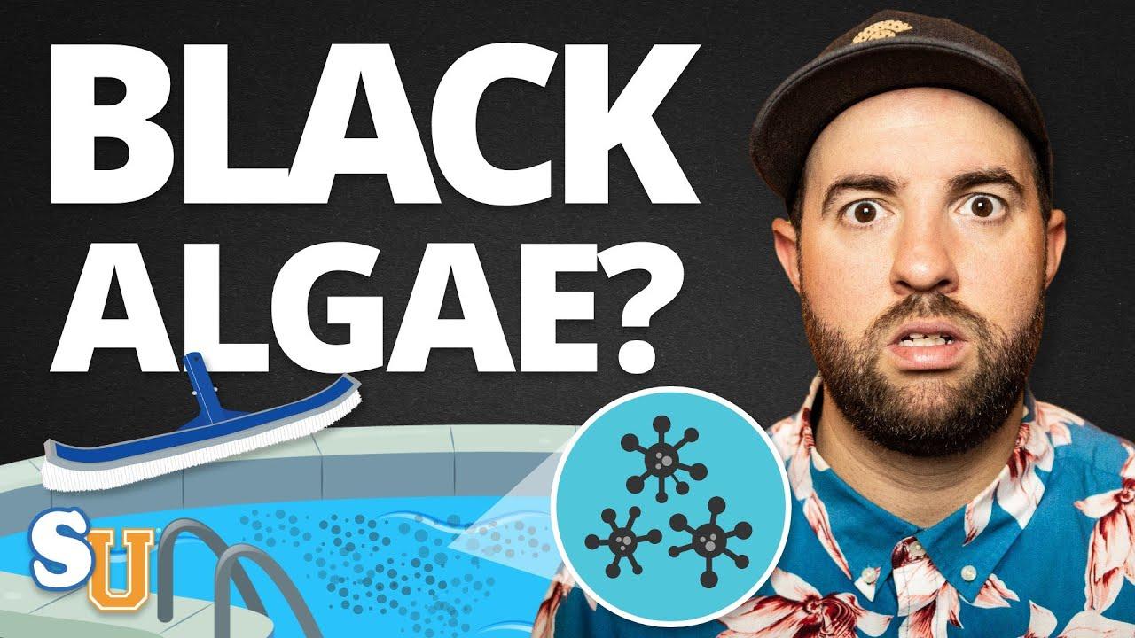 How To Get Rid Of BLACK ALGAE In Your POOL   Swim University
