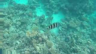 Corrals of Red Sea