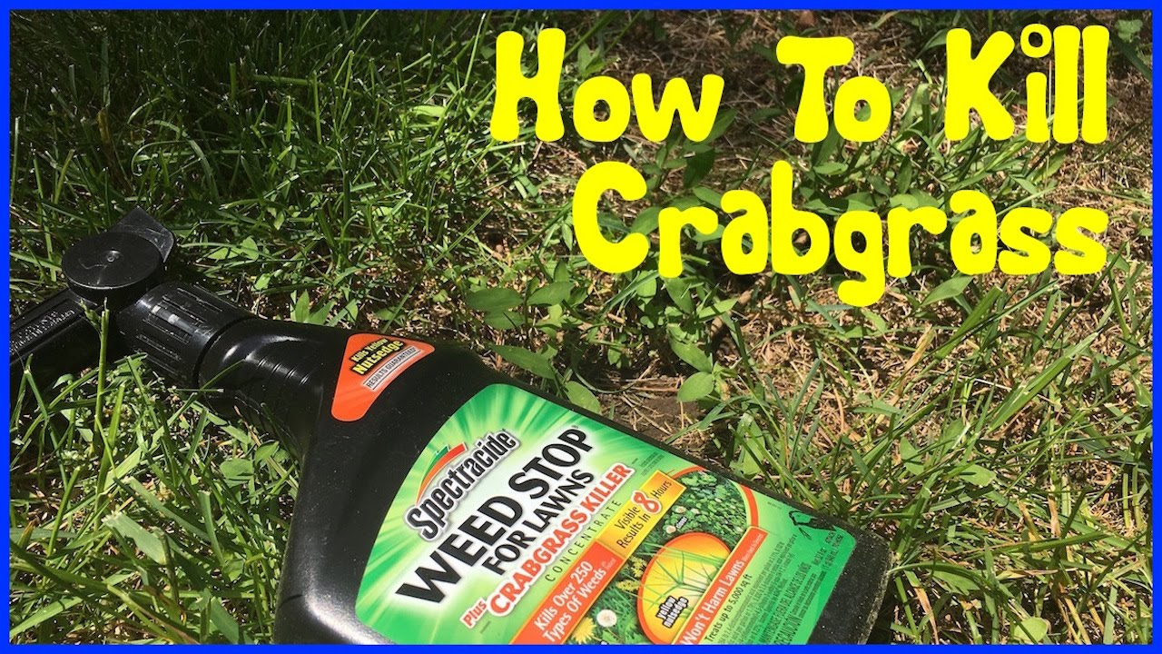 Crabgr Spectracide Weedstop