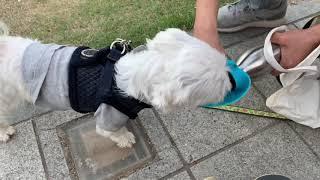 강아지 산책 후 신박한 물병 물통 물마시기