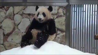 Смешные животные | Танцы панды
