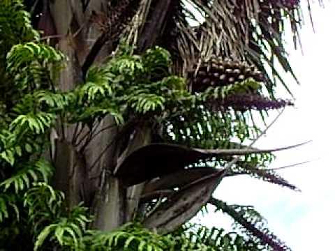 Para Que Serve Aloe Vera (Babosa)? de YouTube · Duração:  4 minutos 14 segundos