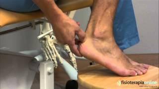 De la parte pierna en la tendón de dolor Aquiles inferior