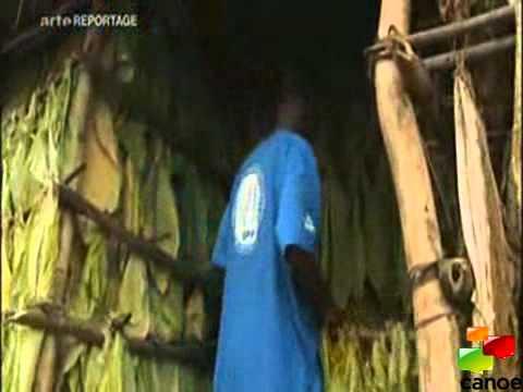 REUSSITE DU MALAWI AU GRAND DAM DU FMI