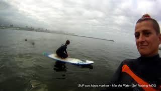 SUP (Stand Up Paddle) CON LOBOS MARINOS EN MAR DEL PLATA