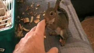 Trained Squirrel