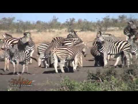 African Wildlife at a Waterhole  Kruger National Park - Visit South Africa