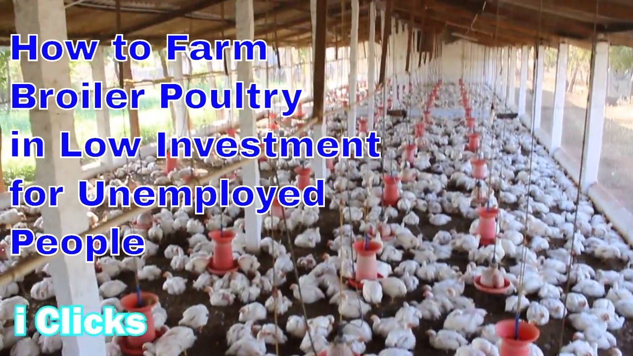 2017 how to starts latest broiler poultry chicken simple very easy method marketing bussiness - Small space farming image ...