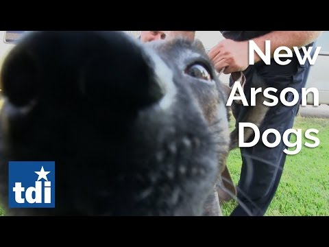 New Arson Dogs | Texas State Fire Marshal