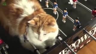 Смешные котята Сон в страных позах