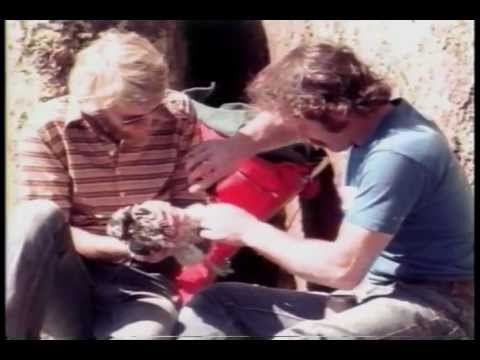 Peregrine Falcon History in Wisconsin