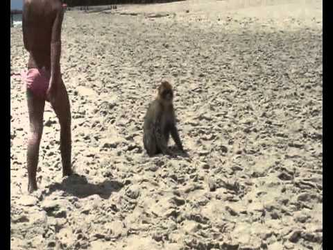 Un singe la plage maamoura tunisie 06 05 2012 echerif production youtube - Singe a la plage ...
