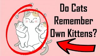 Do Cats Remember Their Babies? Cat Video