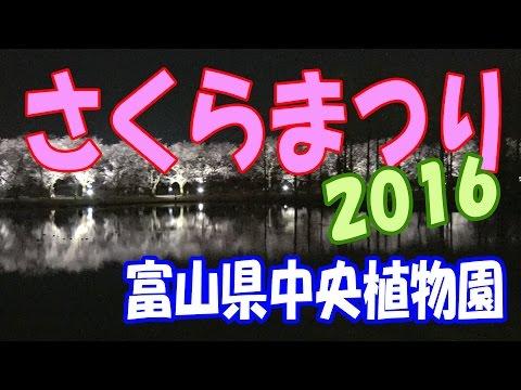 【散策物語】 富山県中央植物園 「さくらまつり」 2016.04.09